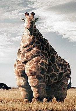 McDonalds Giraffe